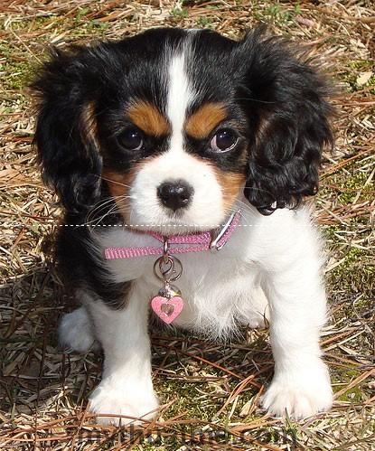 69d43-puppy-photo